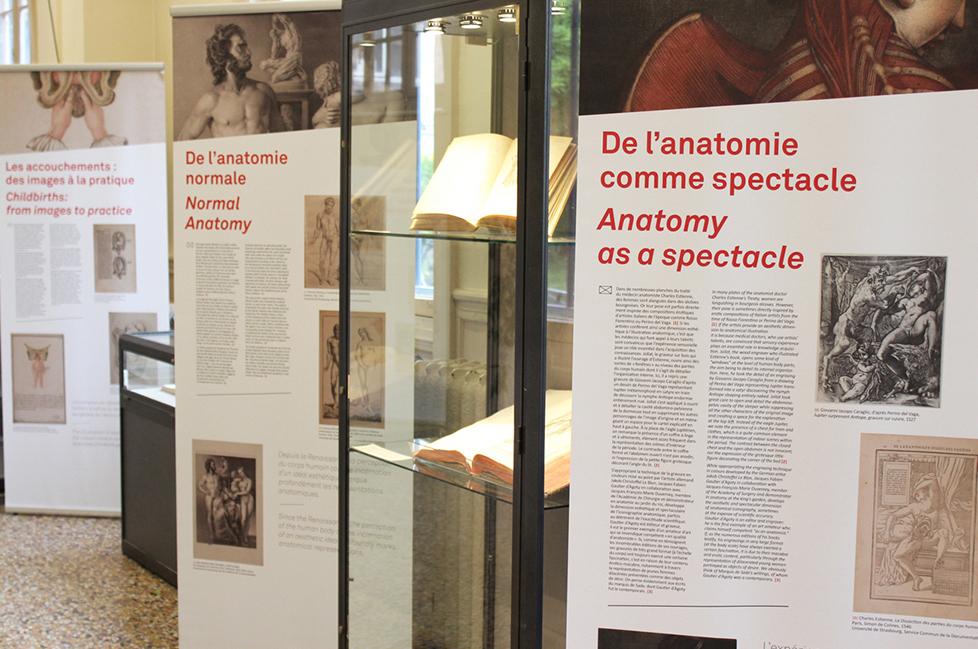 anatomieduneimage_c5