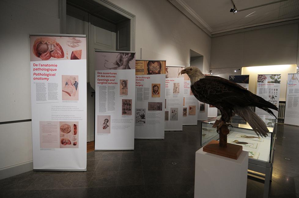 anatomieduneimage_b2