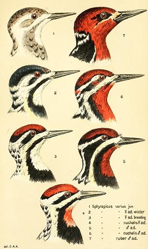 oiseaux_delacouleur