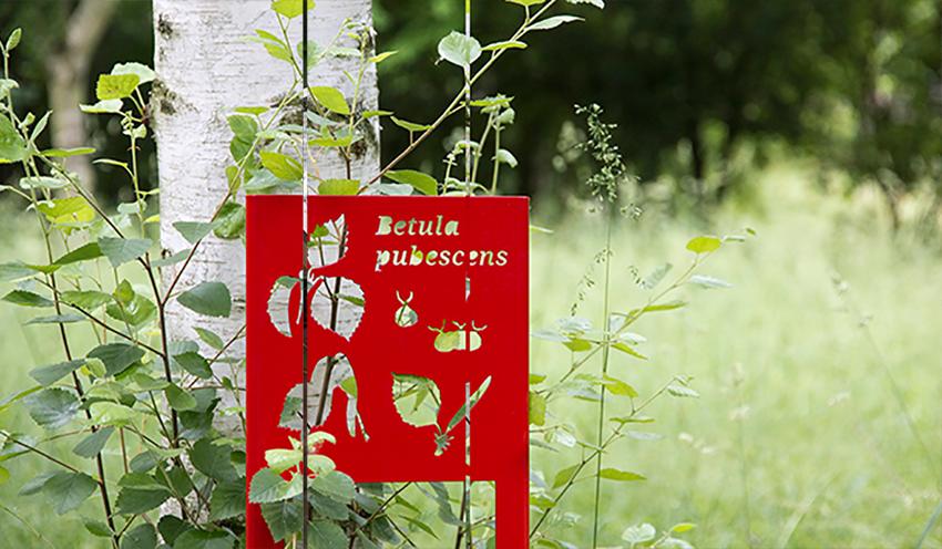 Visuel - Parcours « Côté cours »|au Jardin botanique