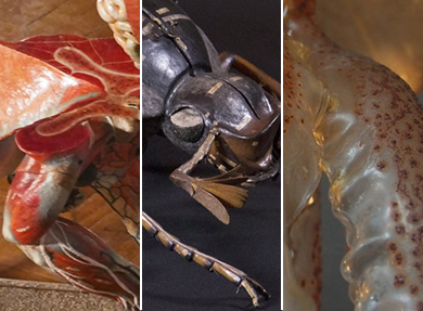 Visuel - Trois nouveaux films de la collection Art'propos | www.modeles-didactiques.fr