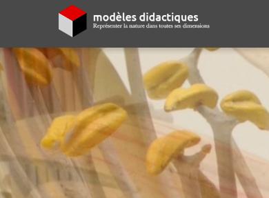 Visuel - Modèles didactiques | www.modeles-didactiques.fr